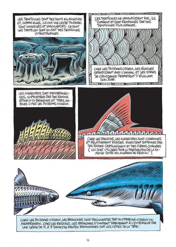 Précision et beauté des requins par Julien Solé.
